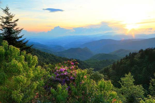 Blue Ridge Parkway And Rhododendron  Art Print