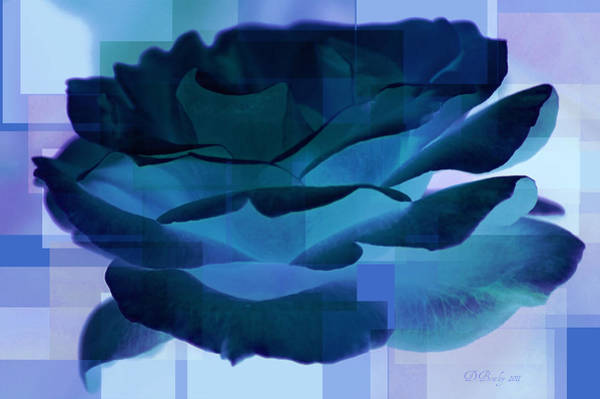 Photograph - Blue Rose by Donna Bentley