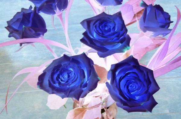 Photograph - Blue Roses Abstract by Karen J Shine