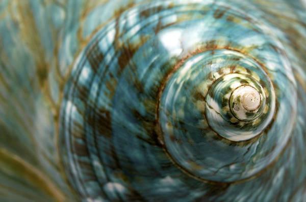 Photograph - Blue Seashell by Fabrizio Troiani