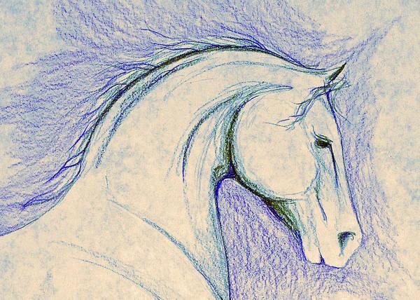 Warmbloods Drawing - Blue Sketch by Jennifer Fosgate
