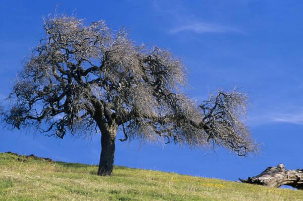 Figueroa Mountain Photograph - Blue Skies - Zaca Peak Trail by Soli Deo Gloria Wilderness And Wildlife Photography