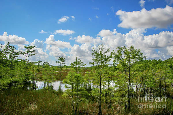 Photograph - Blue Sky Over Grassy Waters by Tom Claud