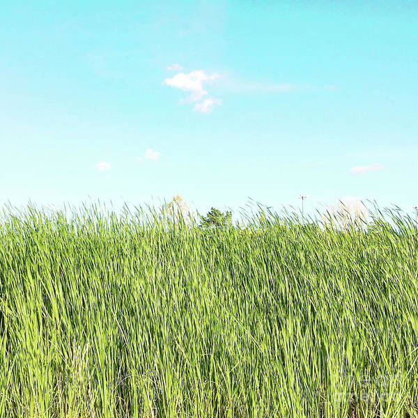 Photograph - Blue Sky Over Green Grass by Cindy Garber Iverson