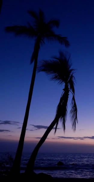 Photograph - Blue Sky by Pamela Walton