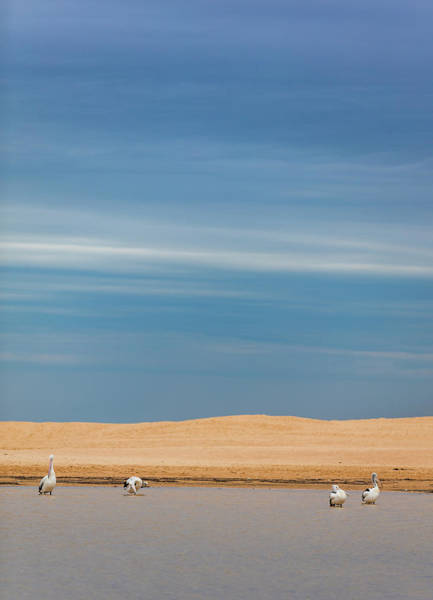 Photograph - Blue Sky Pelicans by Chris Cousins
