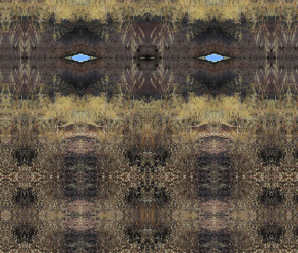 Digital Art - Blue Sky Portal Above Cats In Golden Weeds by Julia L Wright
