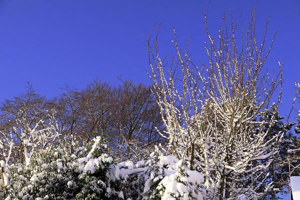 Photograph - Blue Sky by Tony Murtagh