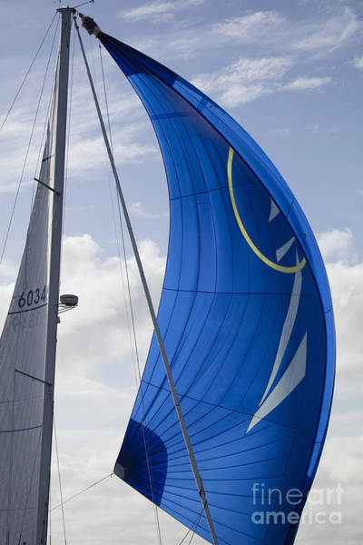 Wall Art - Photograph - Blue Spinnaker Sy Alexandria by Dustin K Ryan