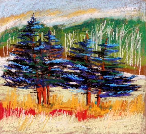 Evergreen Trees Drawing - Blue Spruce Stand by John Williams