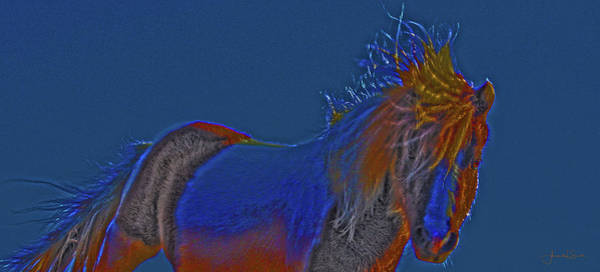 Photograph - Blue Stallion by Amanda Smith