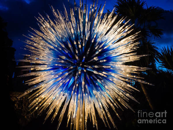 Photograph - Blue Star At Night by Robin Zygelman