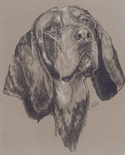 Wall Art - Drawing - Bluetick Coonhound by Barbara Keith