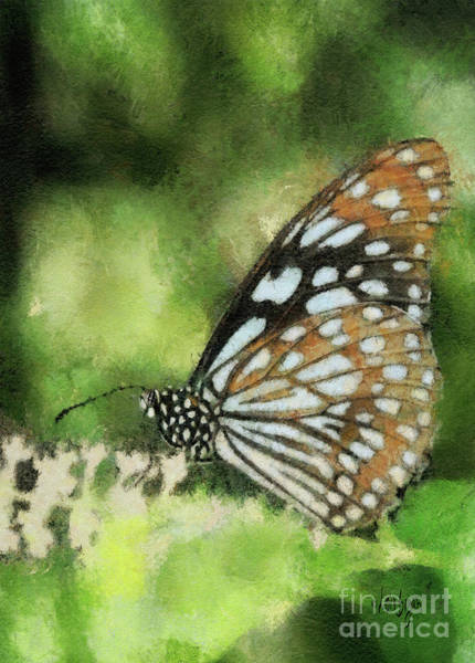 Photograph - Blue Tiger by Lois Bryan