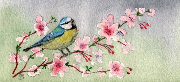 Painting - Blue Tit Bird On Cherry Blossom Tree by Joy of Life Art
