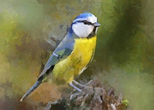 Digital Art - Blue Tit by Charmaine Zoe