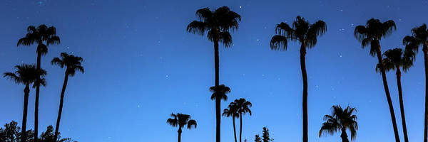 Photograph - Blue Tropical Night Panorama by James BO Insogna