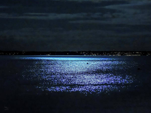Photograph - Blue Velvet by Glenn Feron