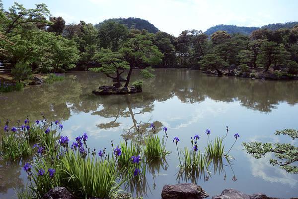 Wall Art - Photograph - Blue Water Irises - Kyoto Japan by Daniel Hagerman
