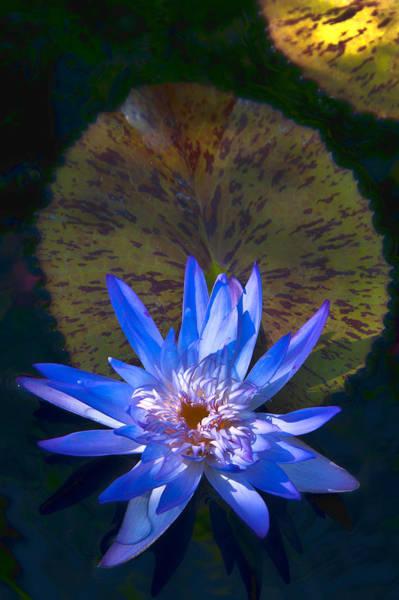 Photograph - Blue Water by Lou  Novick
