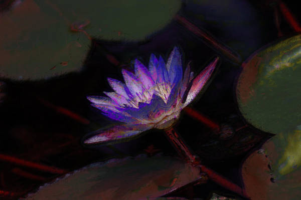Photograph - Blue Waterlily by Donna Bentley