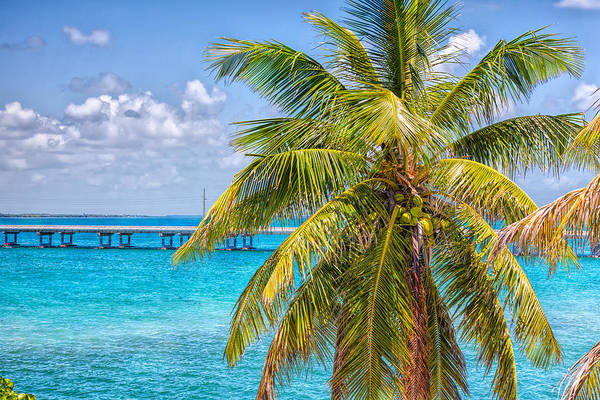 Photograph - Blue Waters And Coconut Palms by John M Bailey