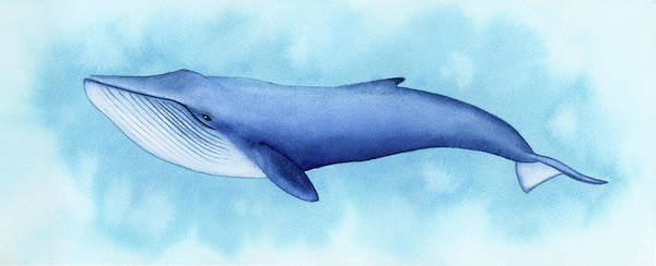 Wall Art - Painting - Blue Whale by Zapista Zapista