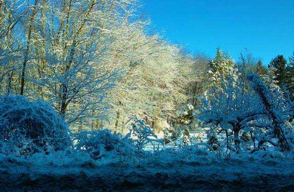Photograph - Blue With Cold by Polly Castor