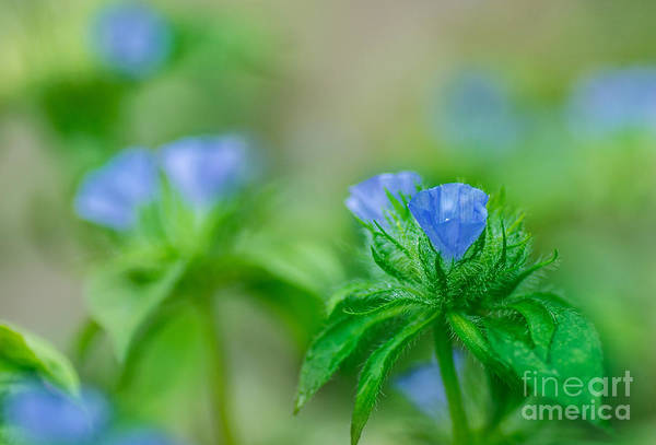 Photograph - Blue With Dew by James Hennis