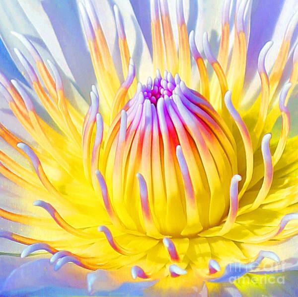Photograph - Blue Yellow Lily  by Jennifer Robin