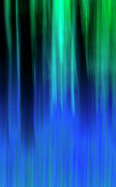 Photograph - Bluebell Panned Abstract by Maggie McCall