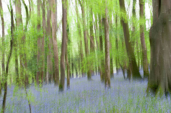 Photograph - Bluebell Woods Abstract  by Helen Northcott