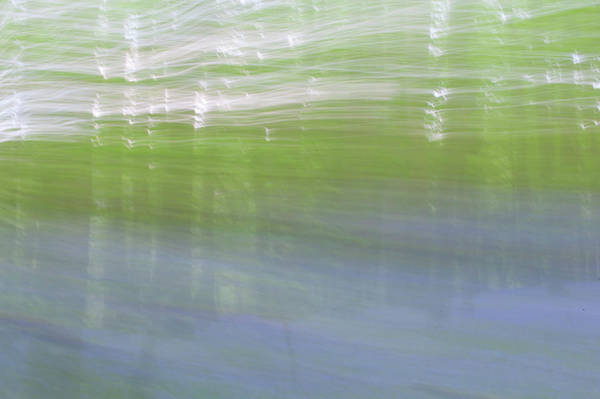 Photograph - Bluebell Woods Abstract Iv by Helen Northcott