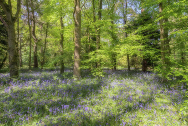 Painting - Bluebells - Lnd652613 by Dean Wittle