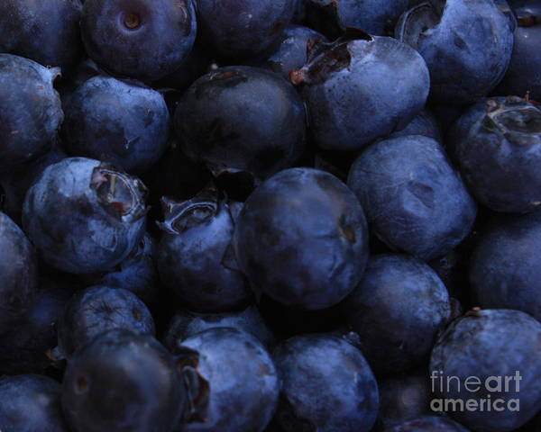 Blue Berry Photograph - Blueberries Close-up - Horizontal by Carol Groenen