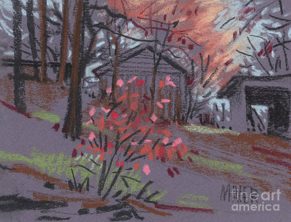 Barn Drawing - Blueberry Bush In Fall by Donald Maier