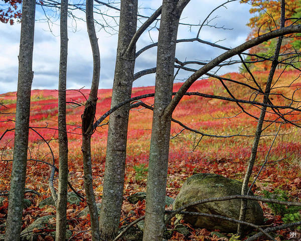 Photograph - Blueberry Field Through The Wall - Cropped by John Meader