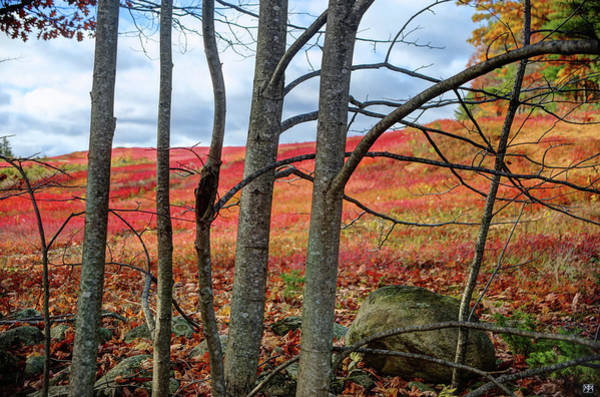 Photograph - Blueberry Field Through The Wall by John Meader