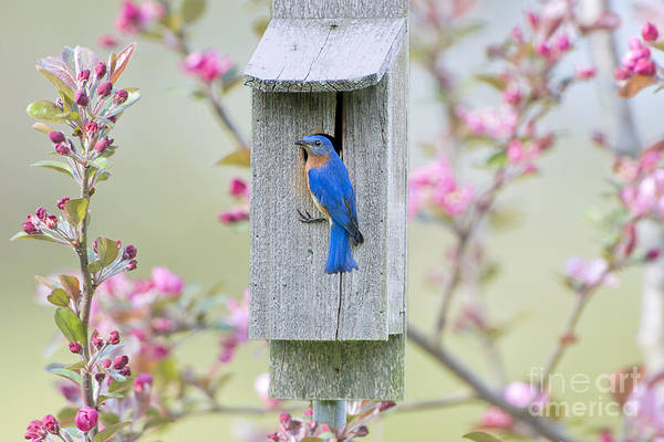 Wall Art - Photograph - Bluebird Nesting Box by Bonnie Barry