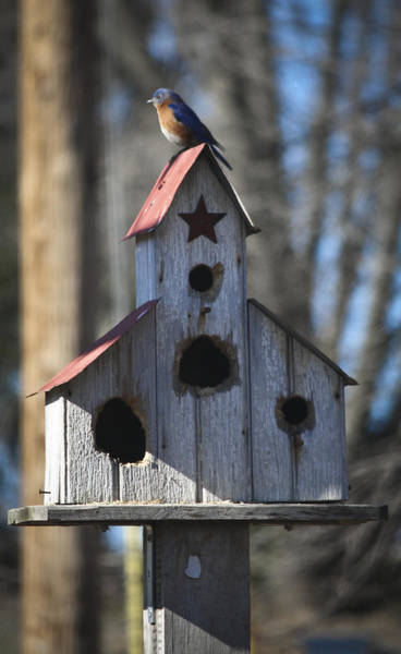 Wall Art - Photograph - Bluebird On Birdhouse by Teresa Mucha