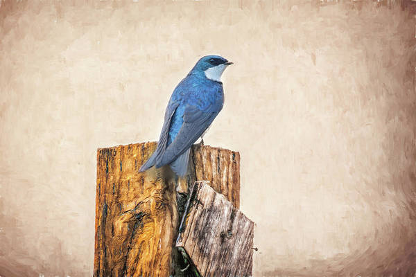 Photograph - Bluebird Post by James BO Insogna
