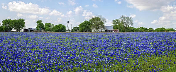 Photograph - Bluebonnet Heaven Panorama In Round Rock by Lynn Bauer