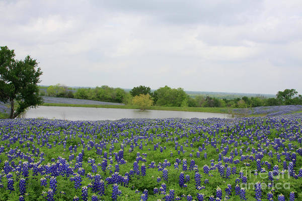 Photograph - Bluebonnet Lake by Jerry Bunger