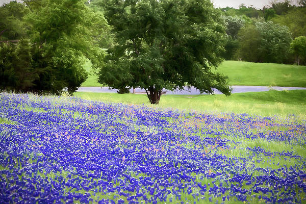 Photograph - Bluebonnet Spring Painting 012818 by Rospotte Photography