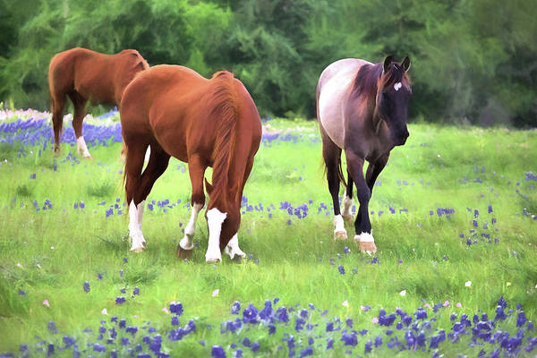 Photograph - Bluebonnets And Horses by JC Findley