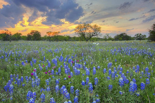 Texas Bluebonnet Photograph - Bluebonnets At The End Of The Road 2 by Rob Greebon