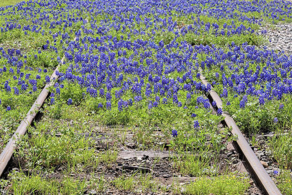 Photograph - Bluebonnets Everywhere by JC Findley