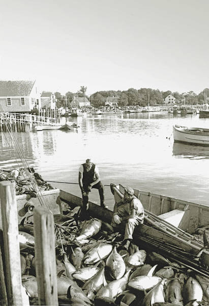 Bluefin Tuna At Barnstable Harbor Art Print