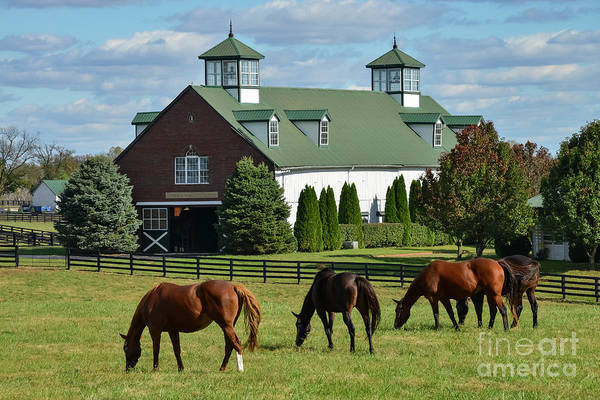 Photograph - Bluegrass Horse Farm by Bob Phillips