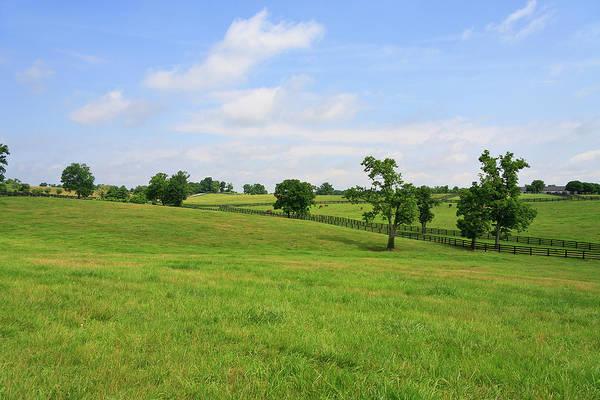 Photograph - Bluegrass by Jill Lang